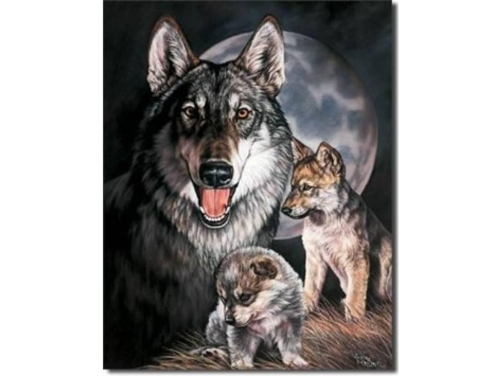 GRAHAM WOLF